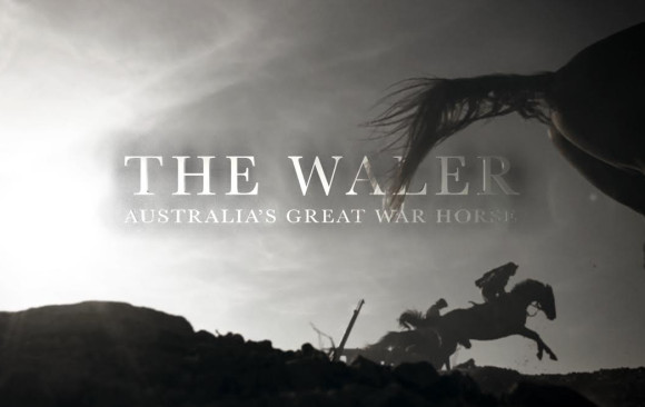 <p>Great War Horses</p>